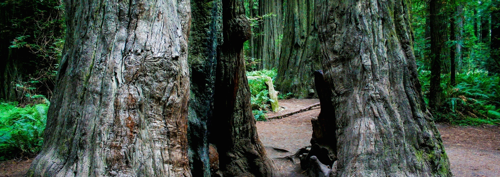 #Dadtography Travel Series – Redwood National Park Review, Northern California